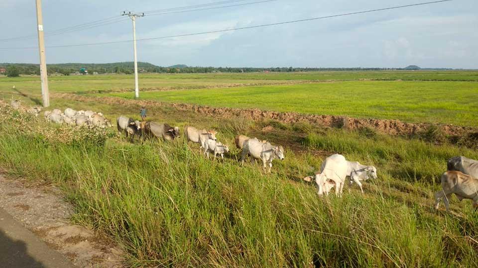Perle-desde-Tailandia-(7)