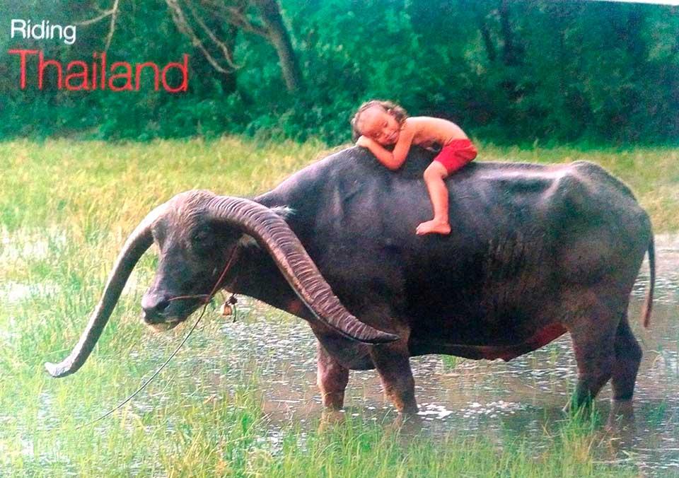 Perle-desde-Tailandia